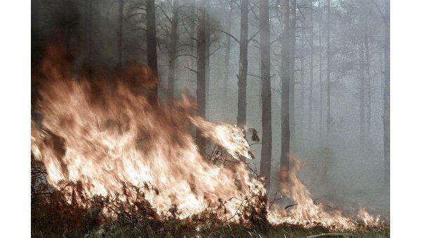 Лесные пожары: виды, причины, способы тушения. Справка