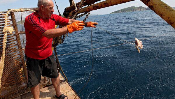 Охота на акул в Приморье