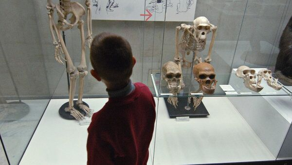 Юный посетитель осмотрел постоянную экспозицию Государственного Дарвиновского музея.