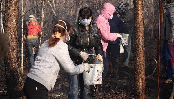 Тушение пожаров в лесной зоне в черте города Братска