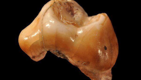 Молочный зуб ребенка из пещеры Грота дель Кавалло
