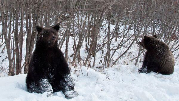 Медведи, архивное фото