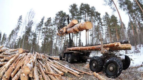 Рубка леса в Челябинской области