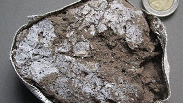 Лист растения из древнего матраса, сохранившийся в виде окаменелости