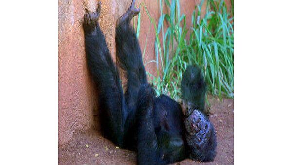 Животных в крымском зоопарке отравили ядом