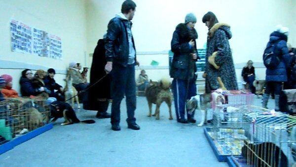 Благотворительная выставка бездомных животных