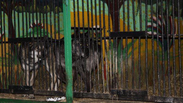Передвижной зоопарк. Архивное фото