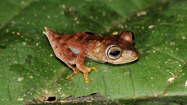 Ученым удалось открыть новые виды животных в тропиках Суринама