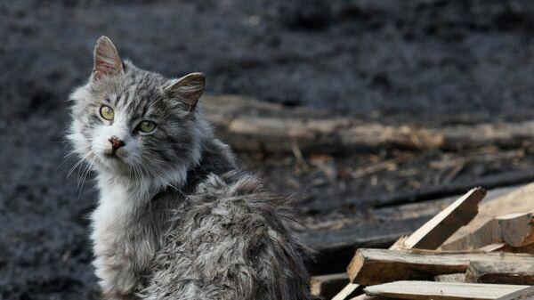 Кот во дворе питомника