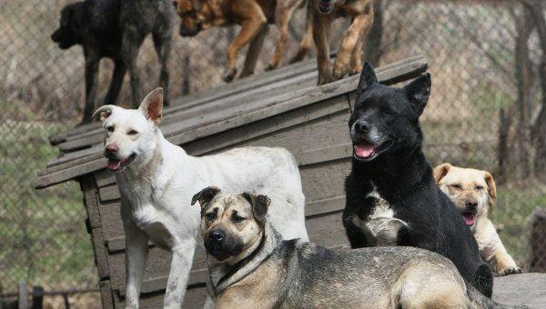 Собаки во дворе приюта для бездомных животных. Архив