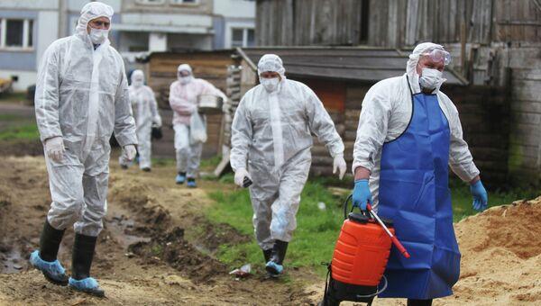 Сотрудники санитарных служб во время ликвидации очага африканской чумы свиней. Архивное фото
