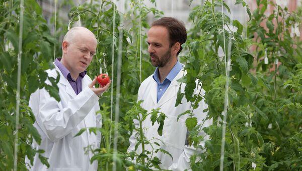 Ученые и помидоры