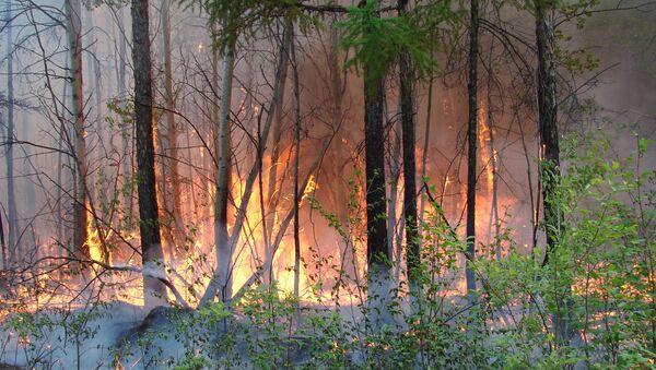 Пожар в Барум-Хемчикском районе Тувы