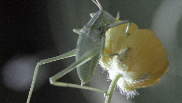 Кузнечик, сидящий на цветке