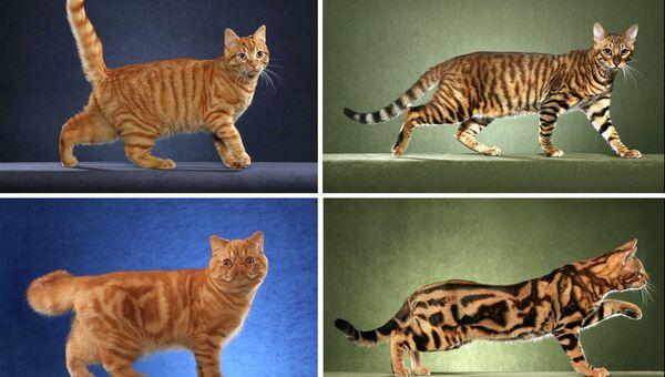 Мутация в гене Taqpep превращает полоски на теле кошек в леопардовые пятна