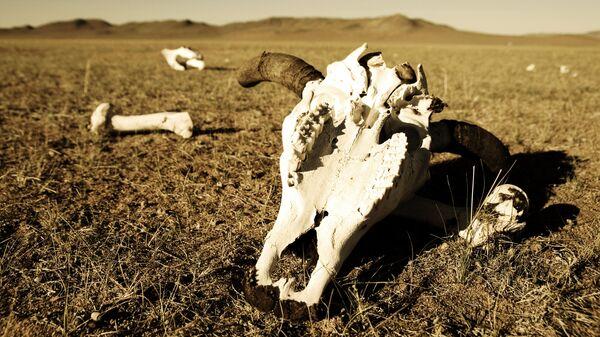 Череп и кости в пустыне