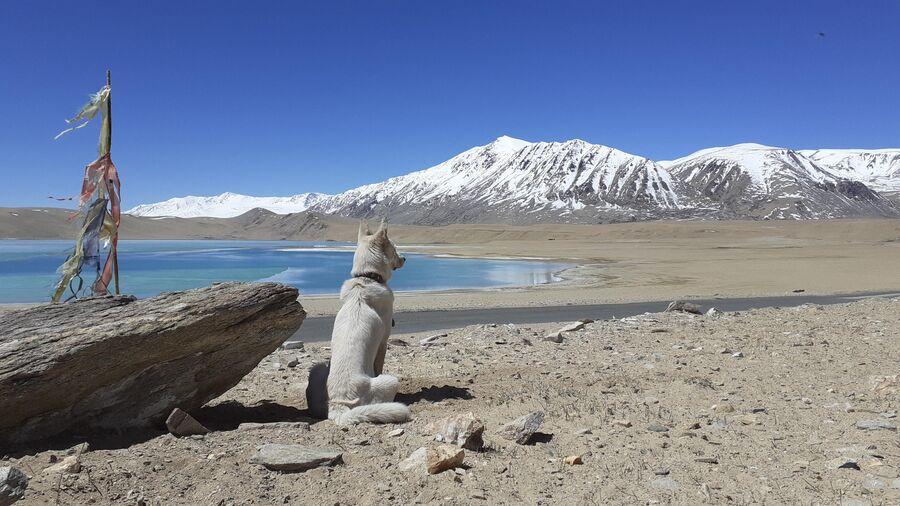 Индия. Цо-Морари, высокогорное озеро между Ладакхом и Тибетом