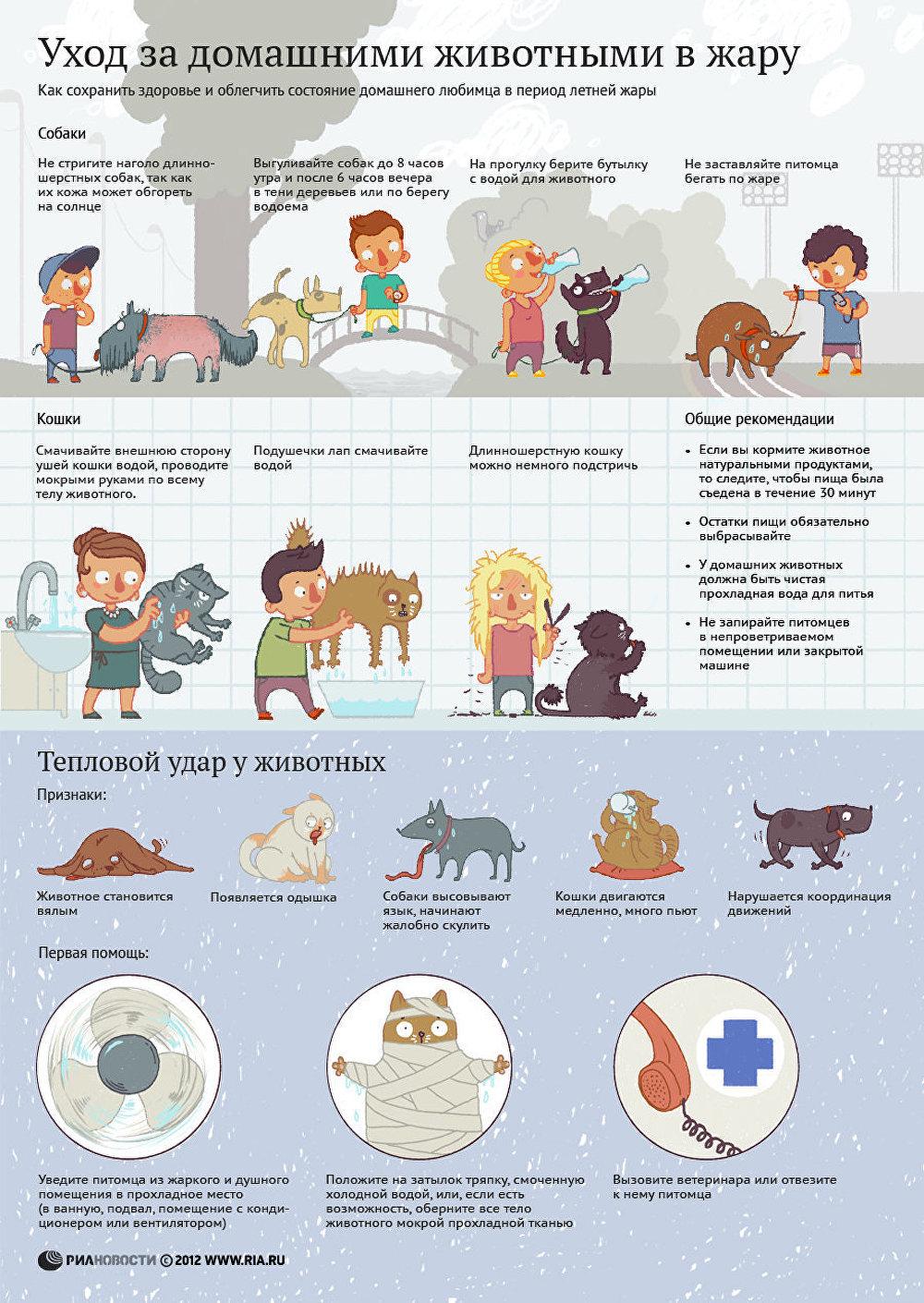 Уход за домашними животными в жару