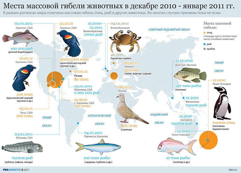 Случаи массовой гибели животных зимой 2010-2011