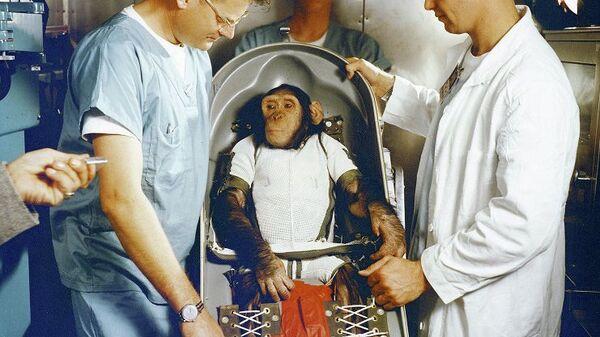 Первый шимпанзе-астронавт Хэм