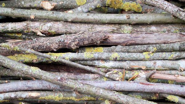 Ветки деревьев. Архив