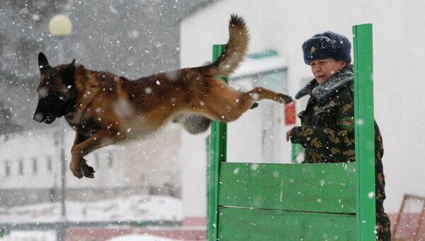 Сотрудница кинологического центра во время занятий со служебной собакой