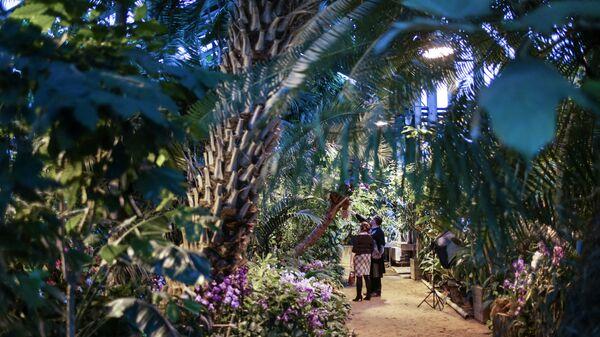 Работа оранжереи орхидей в ботаническом саду МГУ