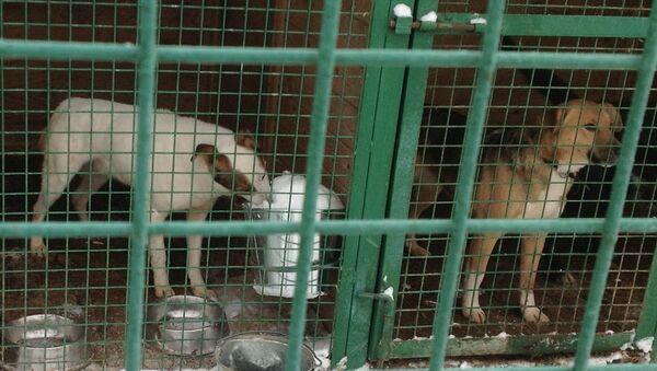 Приют для собак. Архивное фото