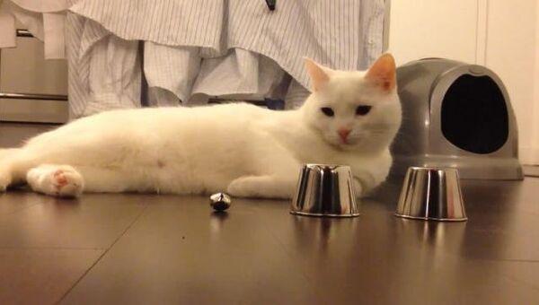 Коты играют в наперсток, музицируют и бегают по стенам