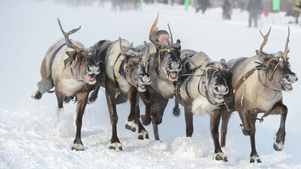День оленевода в Надыме