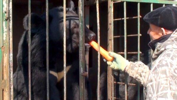 Приморские пенсионеры растят десять гималайских медведей у себя во дворе