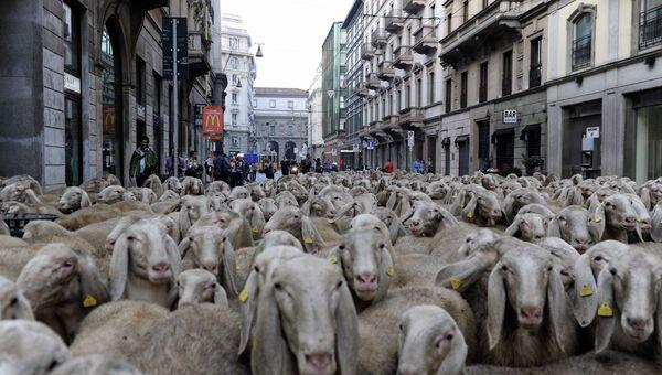 Кадр из фильма режиссера Марко Бонфанти Последний пастырь