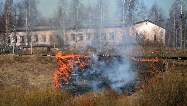 Пал сухой травы в Новгородской области