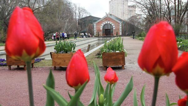 Весенний фестиваль цветов в Аптекарском огороде
