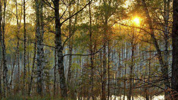 Закат в осеннем лесу в Подмосковье