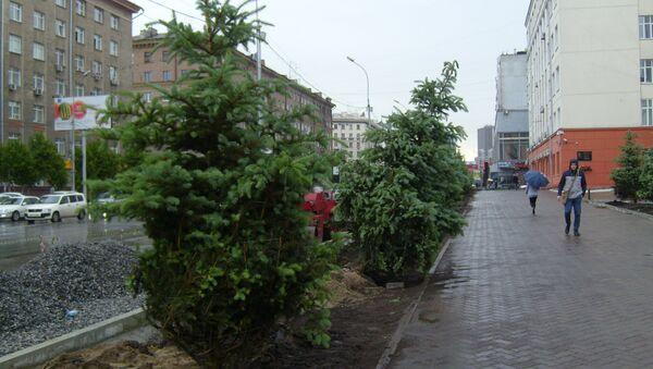 Новые ели начали сажать перед зданием РЖД в центре Новосибирска