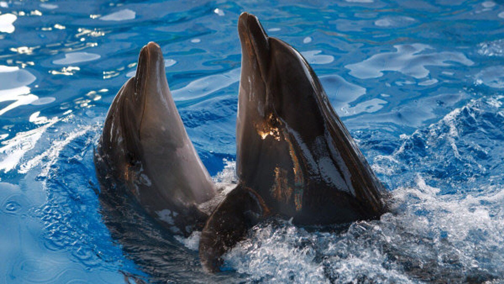 951619798 0:31:600:369 1920x0 80 0 0 c63a22c0331d78e0a21e15b6810b72ff - Во Франции хотят запретить держать диких животных в цирках и дельфинариях