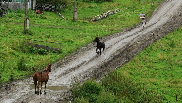 Сельская дорога. Архивное фото