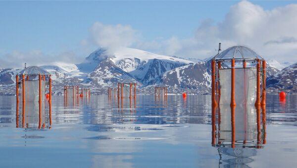 Пластиковые контейнеры, использованные учеными для улавливания планктона и изучения его реакции на закисление воды. Архивное фото