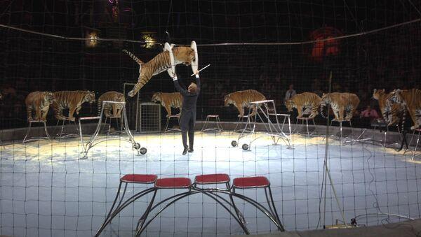 Выступление тигров на фестивале Идол