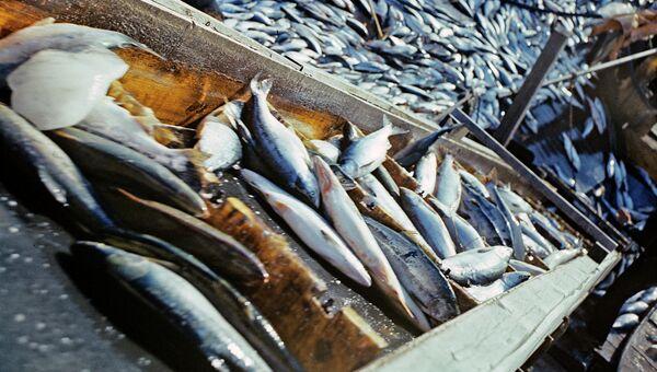 Улов рыбы, архивное фото
