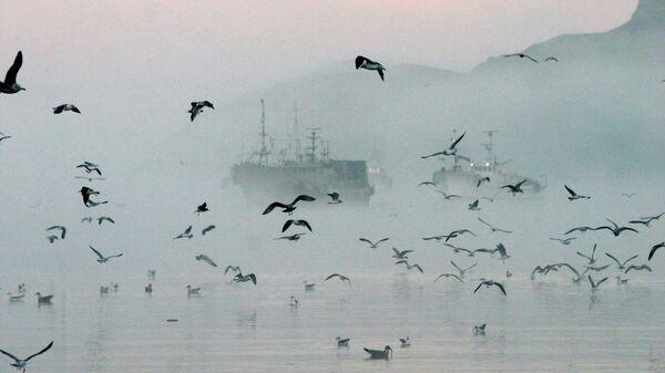 Рыболовецкие суда у берегов Шикотана. Архивное фото
