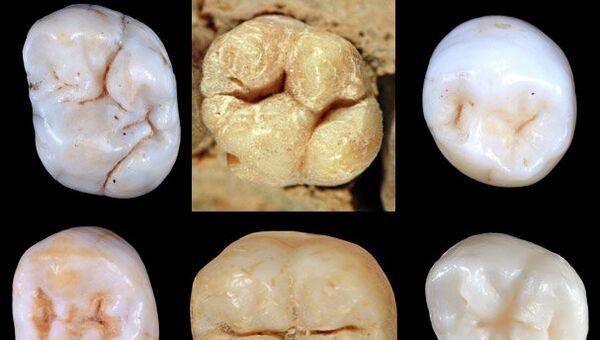 По строению зубов ни один из известных предков человека не подходит на роль общего прародителя человека современного и неандертальцев, архивное фото