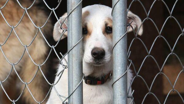 Приют для бездомных собак, архивное фото