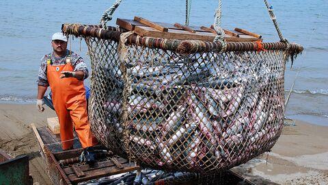 Рыболовецкое хозяйство на Камчатке