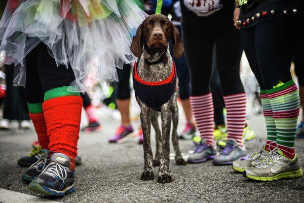 Собака в рождественском костюме