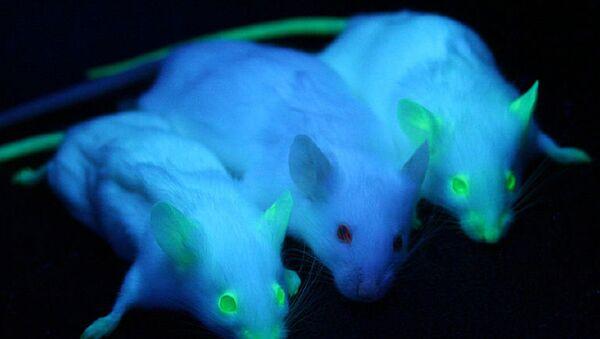 Светящиеся мыши