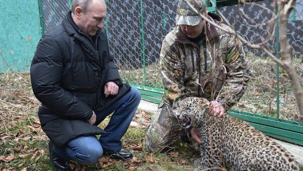 В.Путин посетил Центр разведения и реабилитации леопарда в Сочи. Фото с места события