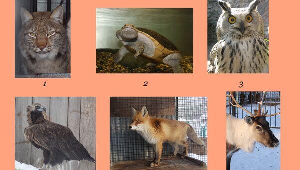 Конкурс Краса северского зоопарка - 2014