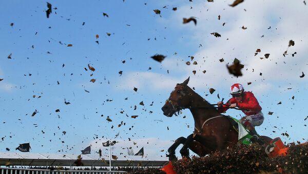 Челтнемский конный фестиваль в графстве Глостершир